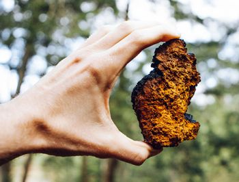 chaga to help recovery from stomach bug