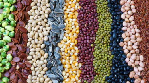 legumes for iron source on a plant-based diet