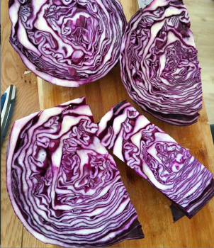 fermented and cultured food cabbage