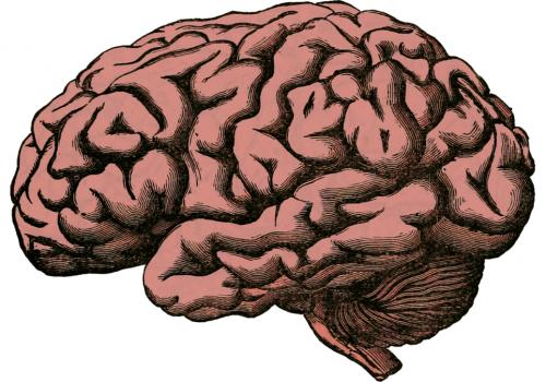 Image of a brain to represent brain health