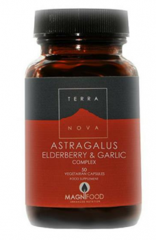 Herbs for Your Respiratory System astragalus