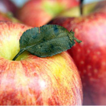 apple scrap vinegar no food waste