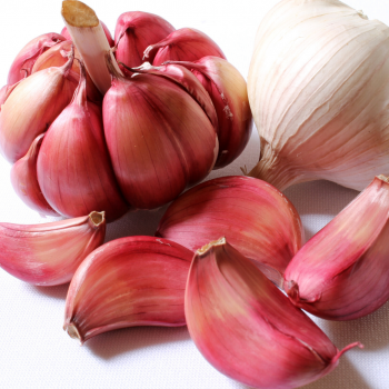 garlic for fire cider