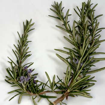 Rosemary for brain support