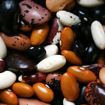 beans for protein