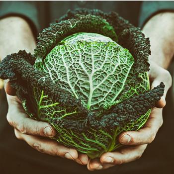 cabbage for calcium