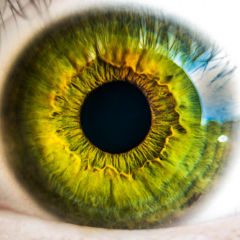 Supporting Eye Health Naturally with Herbal Remedies