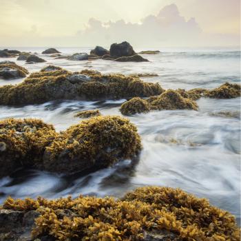 types of seaweed