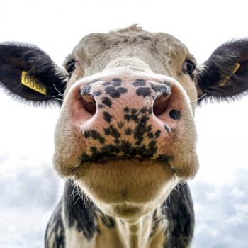 collagen comes from bovine, chicken and marine sources